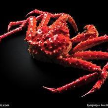 青岛冷冻海产品螃蟹进口专业全套代理