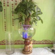 水培玻璃花瓶图片