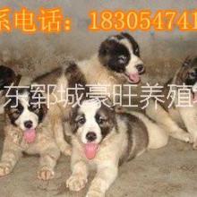 供应用于贸易的广东韶关赚钱养殖肉狗