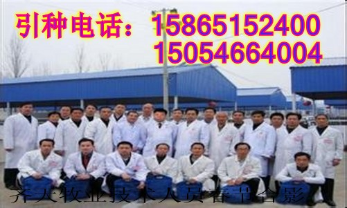 山东省菏泽市郓城县齐天肉牛养殖场西门牛小牛犊