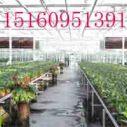 供应用于园艺的温室大棚智能化价格质量好新疆公司