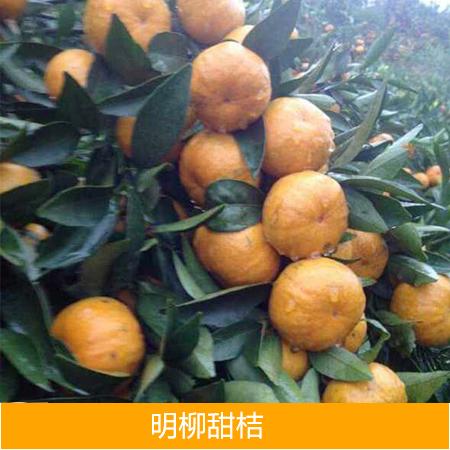 供应广西明柳甜桔批发厂家