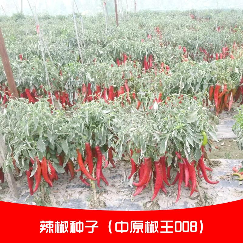 辣椒种子图片/辣椒种子样板图 (1)