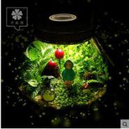 绿色植物盆栽个性diy创意礼品图片