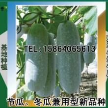 翡翠小米冬瓜种子 ,早熟性极好的节冬瓜两用品种 ,冬瓜种子