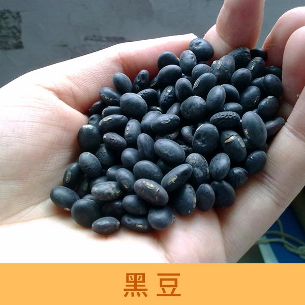 供应黑豆 粮油作物批发 乌豆厂家供应 有机黑豆价格