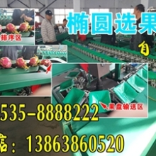 供应广东全自动智能火龙果分选机图片