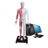 人体针灸穴位发光模型-穴位发光人图片
