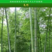 黑龙江毛竹厂家供应图片