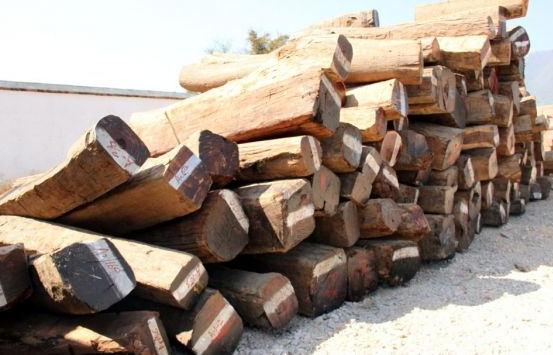 出售进口缅甸花梨木原木
