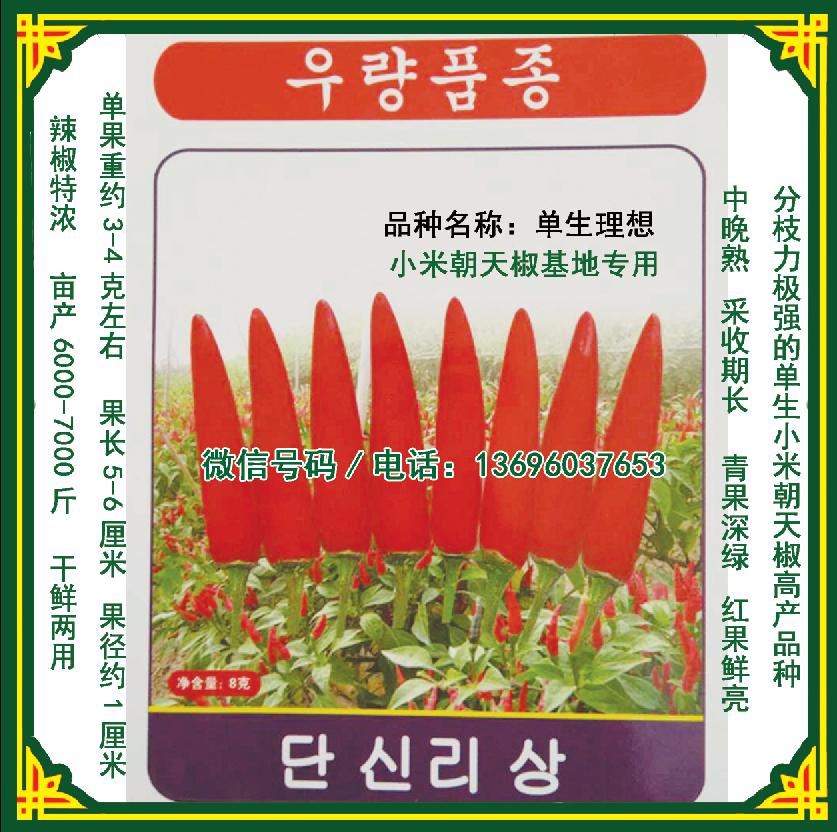 单身理想小米朝天椒种子/辣椒基地