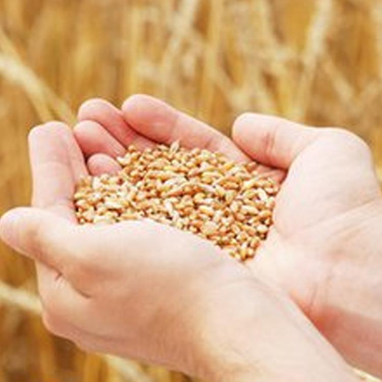 粮食精加工图片/粮食精加工样板图 (4)