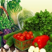 辽宁蔬菜批发 大石桥市瑞丰绿色蔬菜种植有限公司专业种植