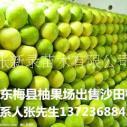 网销售广东新鲜水果梅州沙田柚有机金柚子包邮 有机沙田柚