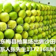 批发梅州沙田柚果园直卖有机水果柚子有机水果柚子批发