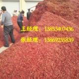 高价收购辣椒,山东高价收购辣椒,专业种植辣椒,优质辣椒
