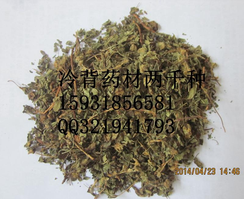 药王茶哪里有卖中药材药王茶别名金蜡梅金露梅金老梅批发供应销售