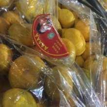 厂家专业销售辽宁橘子批发