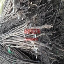 谏壁籽棉清理机维修许可证图片