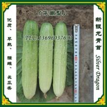 新银龙青春秋黄瓜种子,中早熟杂交一代优质旱(华南型)黄瓜新品种批发