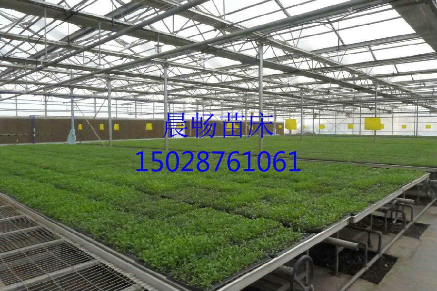 供应1.67*2米温室苗床网片 热镀锌苗床网