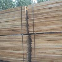 临颍县保发木业  河南白杨木板材厂家 河南白杨木板材价格  白杨木板材厂家直销