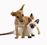 专业办理港澳台宠物托运、香港进出深圳宠物托运 港澳台宠物托运公司