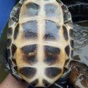 草龟种苗养殖场图片