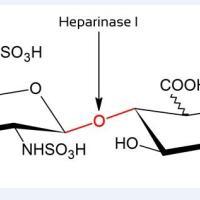 供应重组肝素酶I(heparinase I)