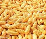 四川益乘丰达饲料公司 收购棉粕饲料用原材料玉米小麦高等