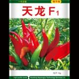 山东曹县正品蔬菜朝天椒种子 天龙F1  高产辣椒籽蔬菜蔬果种子