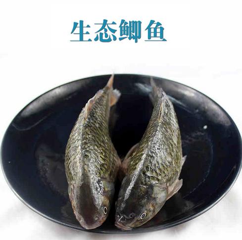 厂家养殖大量供应淡水生鲜鲫鱼出售销售