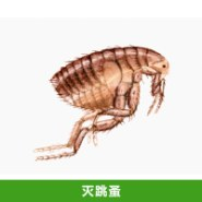 灭跳蚤设备图片