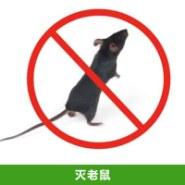 灭老鼠服务图片
