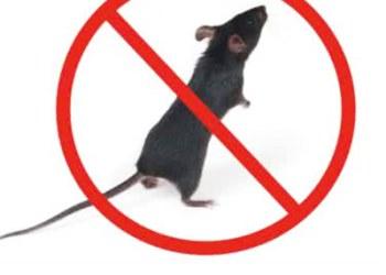 灭老鼠公司图片