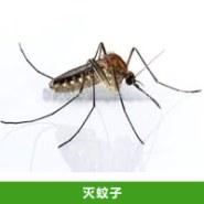 灭蚊子图片