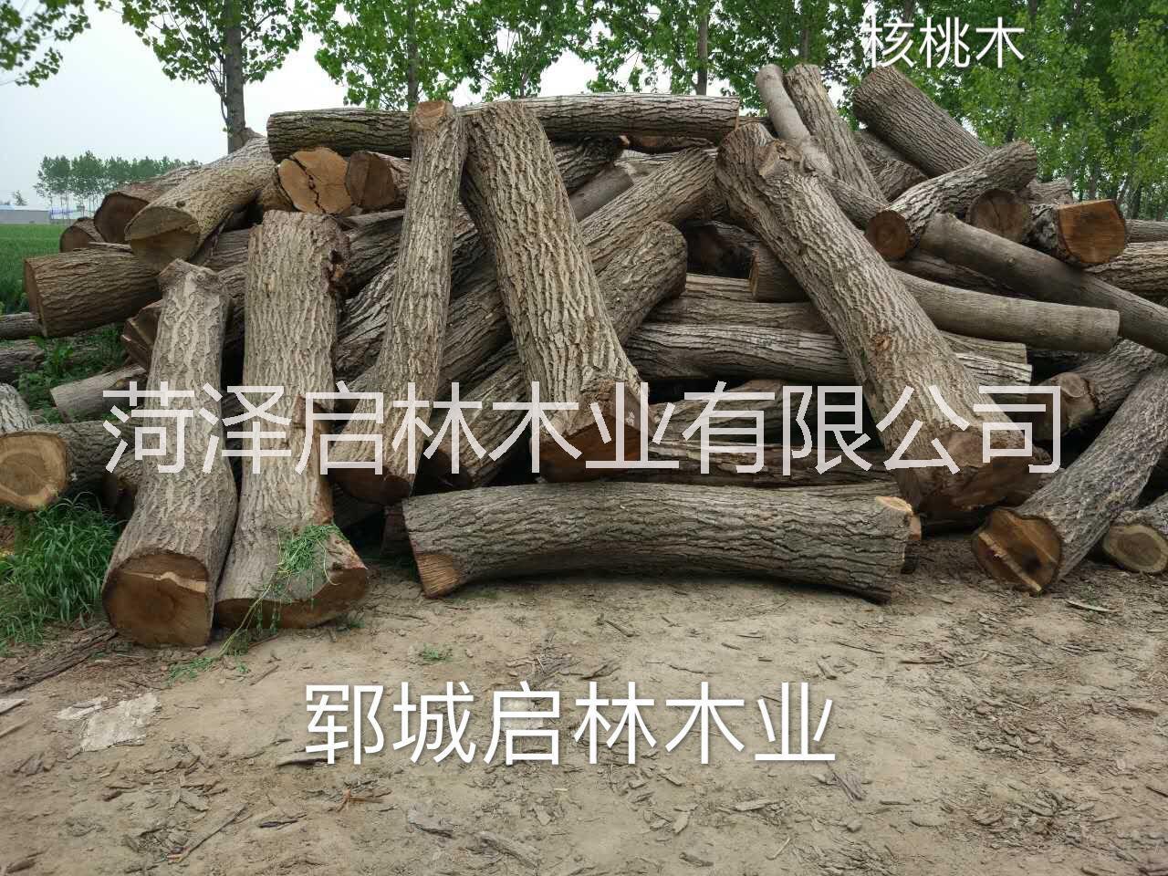 大量供应用于工艺品/雕刻/制作家具等的核桃木/优质大径核桃原木批发