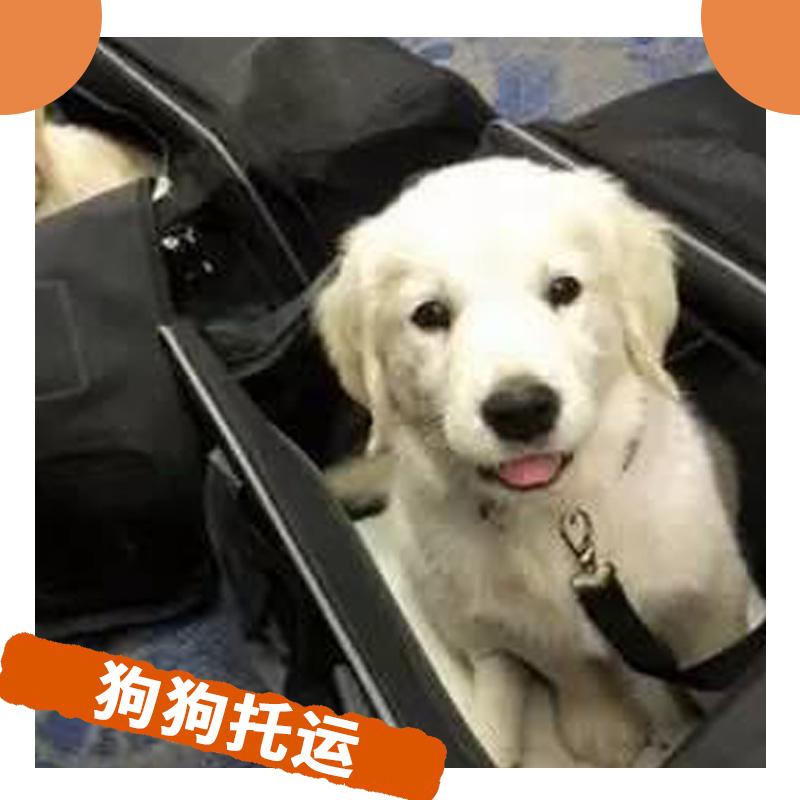狗狗托运图片/狗狗托运样板图 (1)