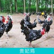 湖南贵妃鸡图片