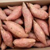 山东优质烟薯25商品薯   面向全国大量供应  批量供应烟蜜薯货源