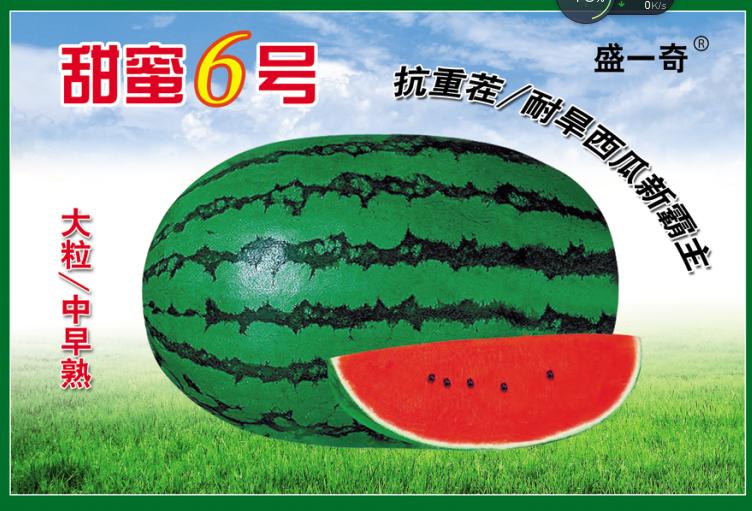露地大西瓜种子 盛琪种子公司销售高品质西瓜种子 抗重茬西瓜种子 大果红瓤