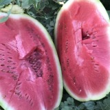 新疆西瓜销售 新疆西瓜什么价格 西瓜商城 新疆西瓜品种 西瓜影音绿色版 大量收购西瓜 西瓜资源 西瓜基地