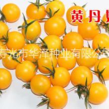 批发黄色樱桃番茄种子正圆形高产黄色樱桃番茄种子-黄丹妮