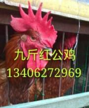 http://imgupload3.youboy.com/imagestore20180529bea4ffb8-b468-4a31-8a53-d31611aeb7f9.jpg
