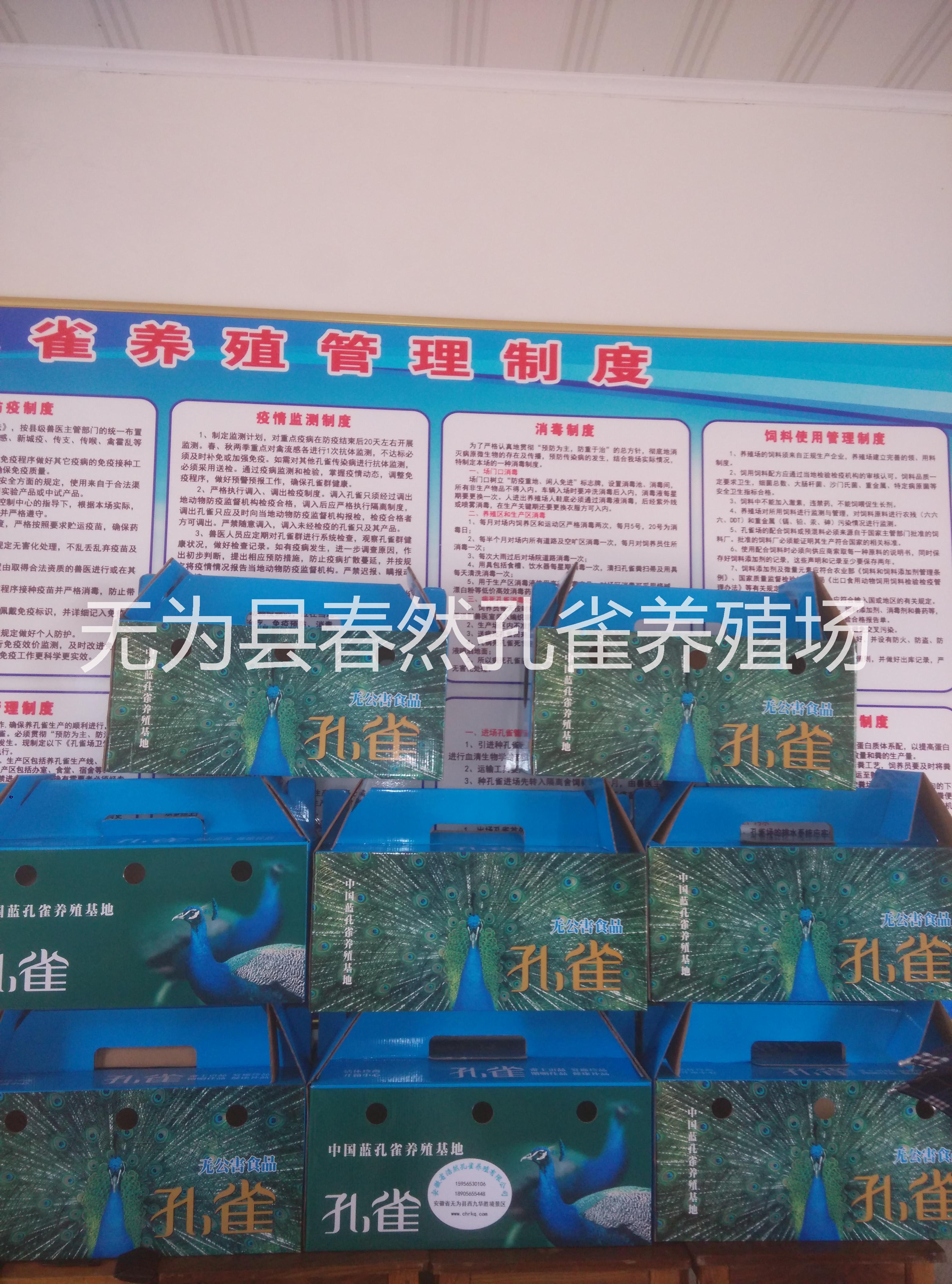 大量供应全国市场孔雀标本安徽省浩然孔雀养殖有限公司供应