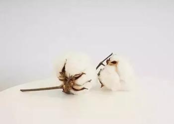 贵州贵阳长绒棉定制图片