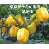 皇蒙迪黄色甜椒种子 辣椒基地种植 内江盛琪种子公司销售 方甜椒
