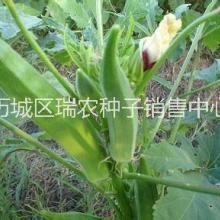 优质保健蔬菜种子批发|黄秋葵|补批发