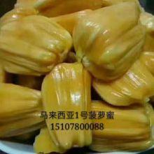 马来西亚1号菠萝蜜 云南红肉菠萝蜜生产基地 供应商经销商报价 红肉菠萝蜜批发价格图片