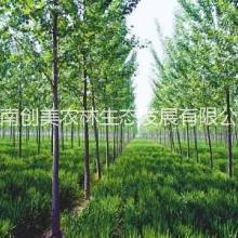 周口林业评估,林业评估服务,周口林业评估事务所